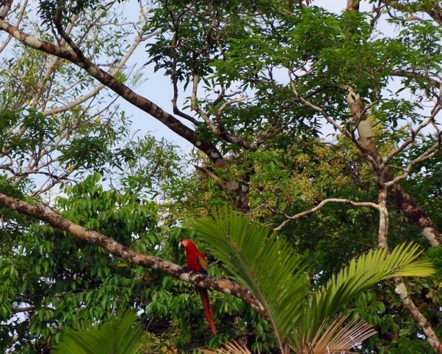 Las Guacamayas-025